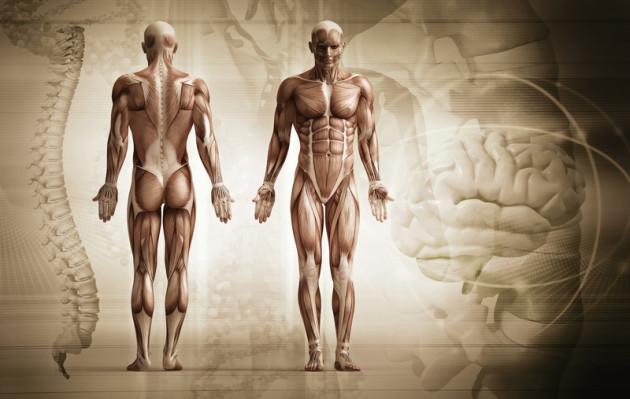 Rückenschmerzen behandeln wir u.a. mit amerikanischer Chiropraktik.